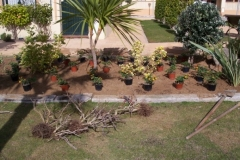 sustitucion-plantas